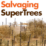 Salvaging Scenic Express SuperTrees